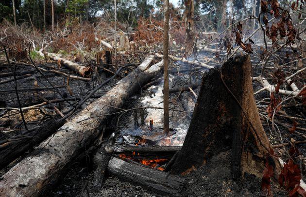 amazõnia desmatamento